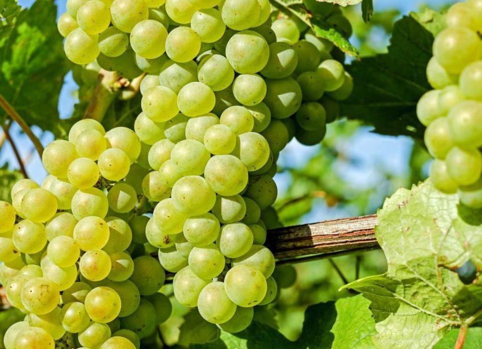 Зелен виноград! Почему лихих людей сегодня так тянет в турагенты?