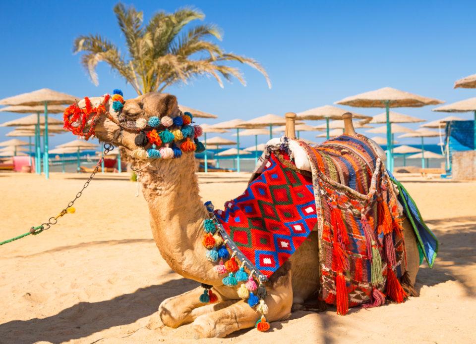 Туристические объекты в Тунисе начнут открываться 25 мая