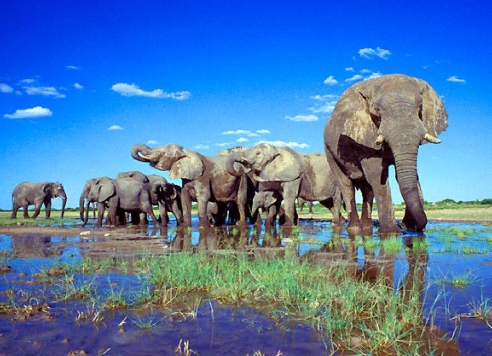 Намибия с 1 сентября открыта для туристов