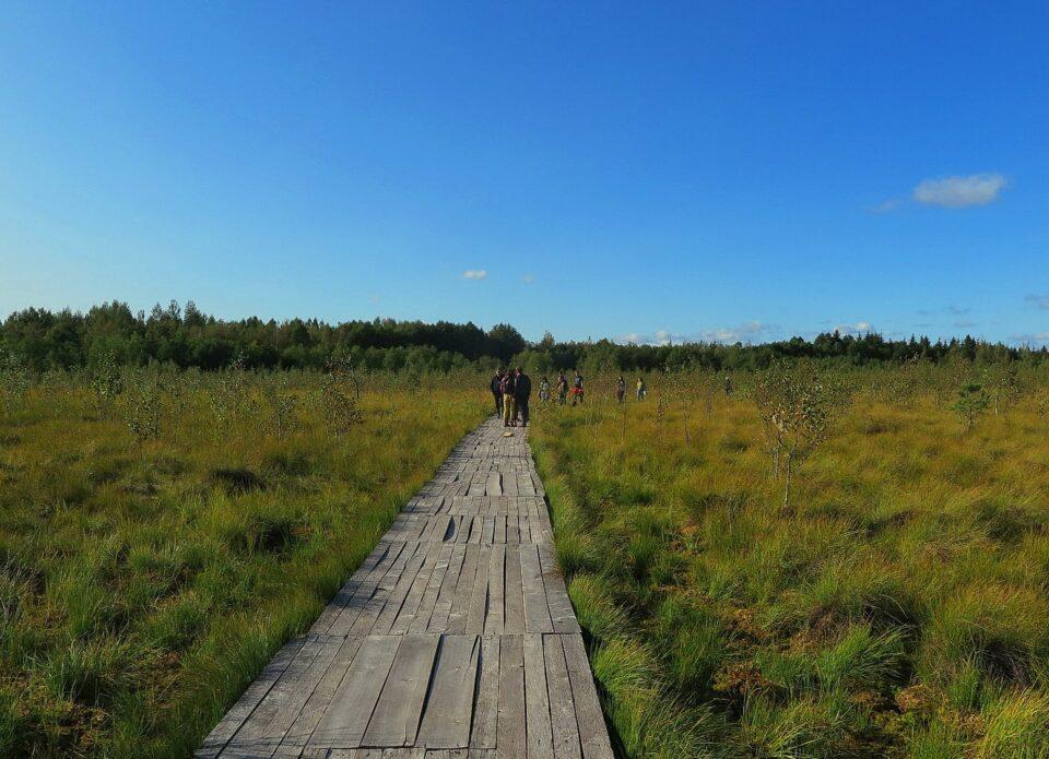 Одна из самых популярных эко-экскурсий в Беларуси – тропа по болоту Ельня