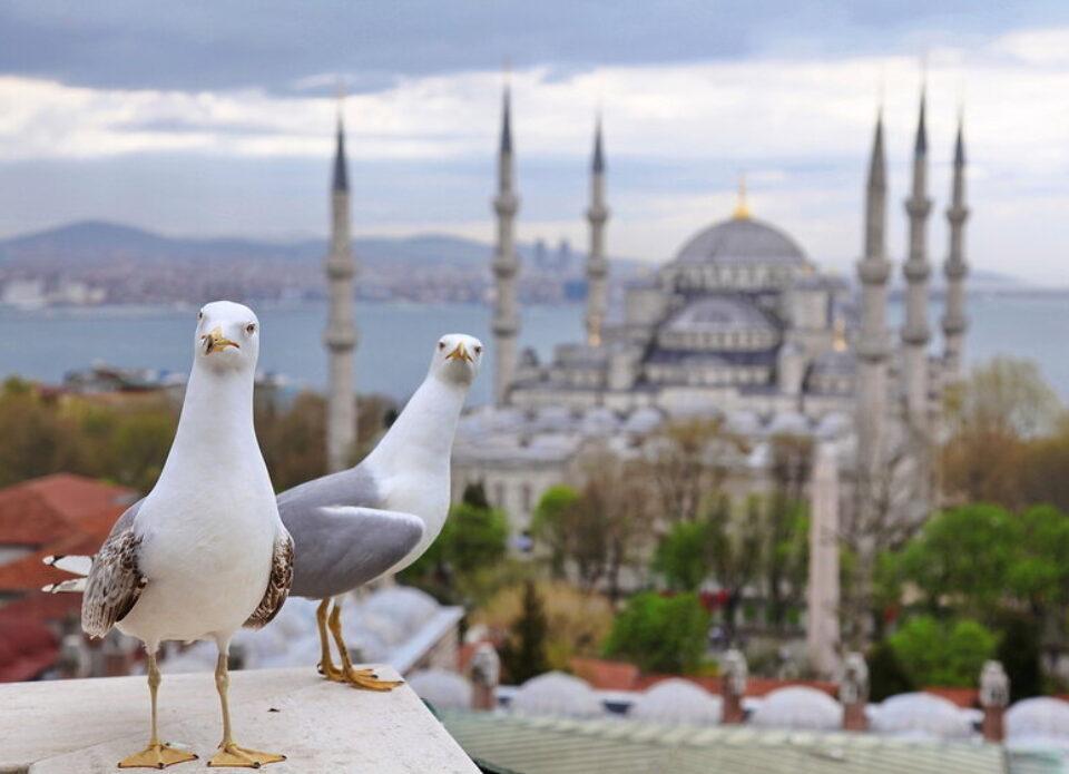 Руслан СЕГЕНЮК: «В эти дни Стамбул принадлежит чайкам, котам и немногим туристам!»