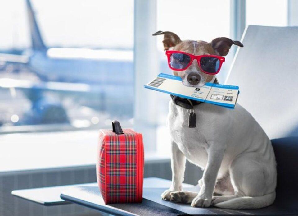 «Белавиа» возобновляет перевозку животных на чартерных рейсах